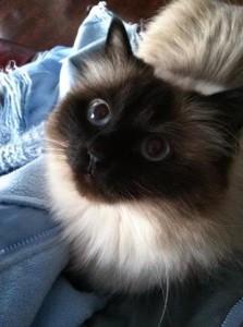 Deb's cat